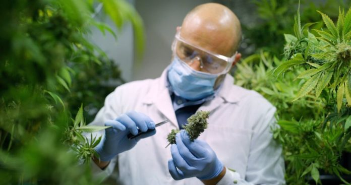 Medical Cannabis Research