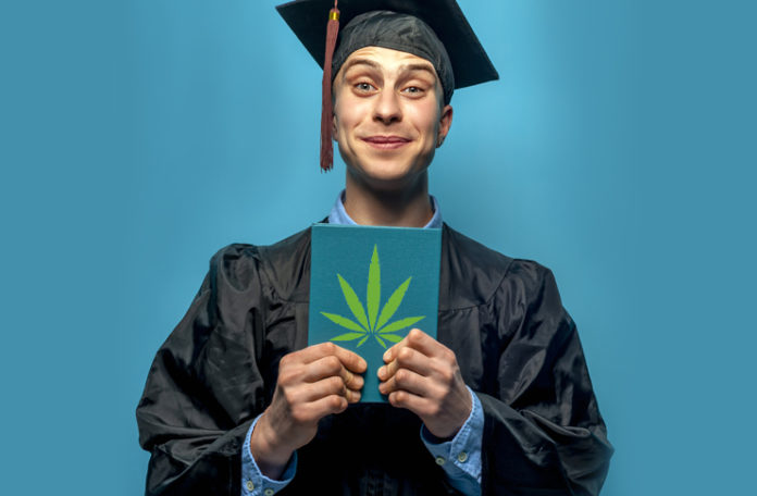 MBA in the Cannabis Industry