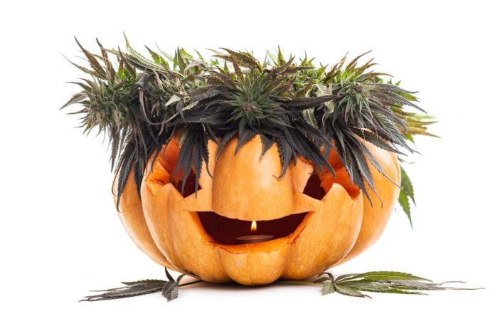 Halloween pumpkin jack lamp and cannabis leaves