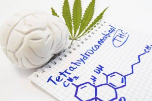 Interaction of THC with brain