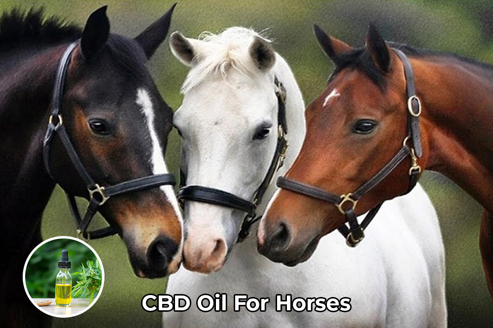 CBD Oil For Horse