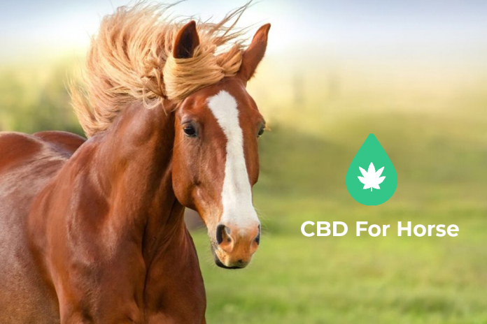 Cannabidiol (CBD) for horses
