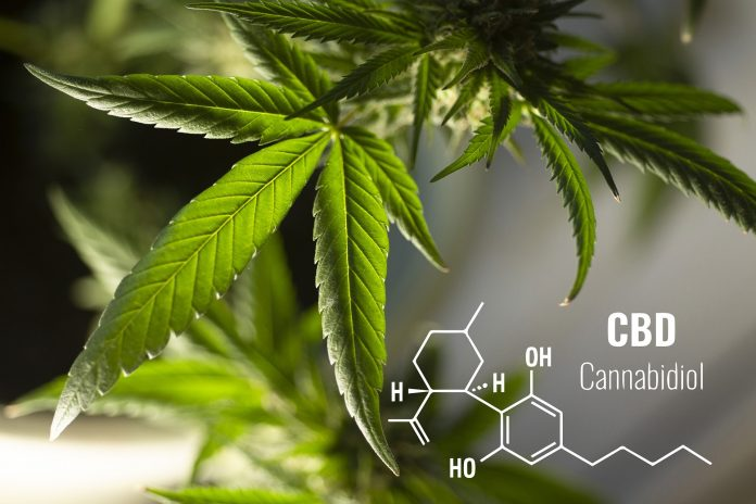 Hemp Leaves & CBD Chemical Formula