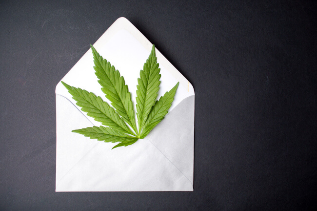 Hemp leaf in Hemp Paper Post Card