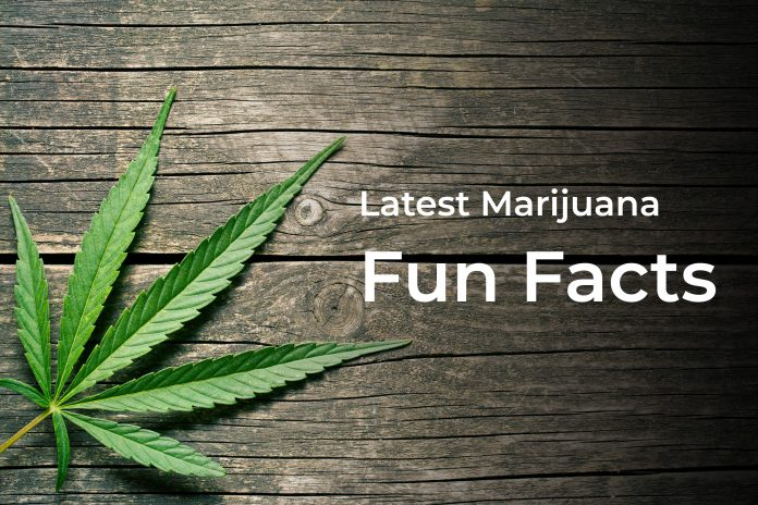 Latest Marijuana Fun Facts and Memes