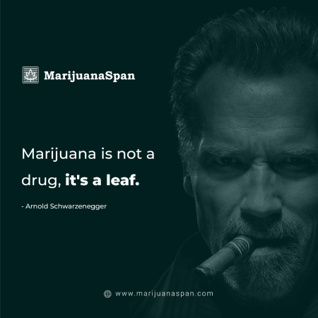 Weed is nothing but a leaf.
